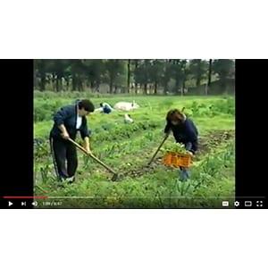 VIDEO - South America